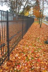 308, Ornamenal iron fence in the fall